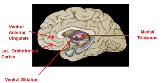 ventral-striatum
